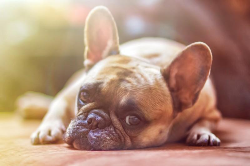 Forkæl din hund eller kat med eksklusive produkter fra Huntercph.dk