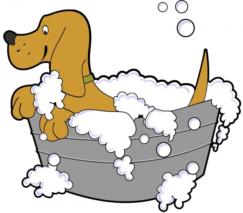 Vælg en god shampoo, når din hund skal i bad