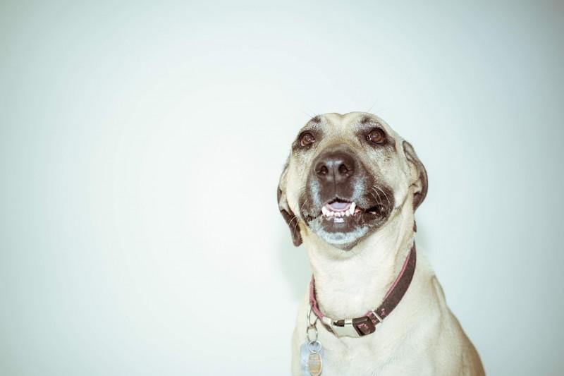Sæt din hunds stil